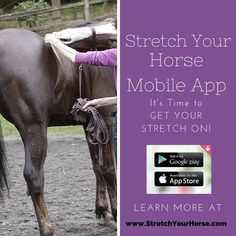 Whether conditioning a horse for performance work or rehabilitation efforts, stretching can provide many benefits. Stretching as part of an overall horse care program can help improve performance, strengthen your horse's body and prevent injury. Now there's a phone-based app that can show you how to stretch your horse safely and effectively every time.