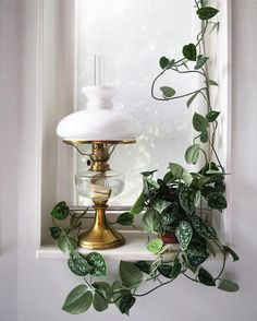Life never mistreats anyone; if you see a shadow, there must be sunshine nearby. #houseplants
