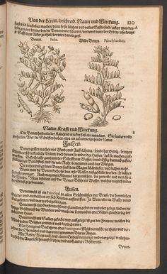 Kreuterbuch desz hochgelehrten unnd weitberühmten Herrn D. Petri Andreae Matthioli. Beans. (Rar 74 fol.)