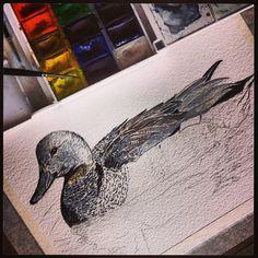 #watercolor #nonfinita #birdfreaks #bird #gadwall #anas #strepera . #акварель #птицы . #аcuarela en #proceso de #ánade #birdwatching #fotobirding - @pacotorresill- #webstagram