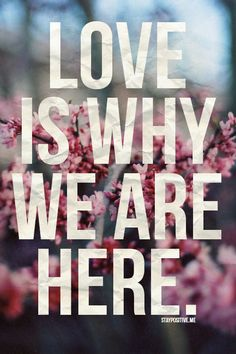 Love is the reason we walk around this earth. Love guides our lives. Love is why we are here. Love is my religion. The Words, Cool Words, Great Quotes, Quotes To Live By, Inspirational Quotes, Motivational Quotations, Positive Quotes, Love Images, Words Quotes