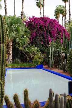 My favorite type of flowers Garden - Marrakech (April Colorful Garden, Tropical Garden, Cactus, Phoenix Homes, Destinations, Outside Living, Love Garden, Fire Pit Backyard, Parcs