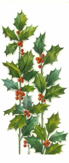 Vintage 1965 Christmas Greeting Card, Hallmark Slim Jims, Green Holly and Red Berries