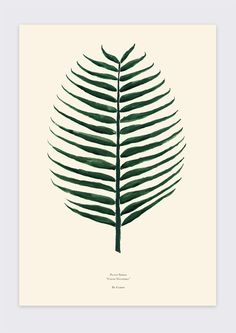 Shop our botanical prints by By Garmi we love! #shop #interiors #art #home #botanical #tropical #plants #home #ohwhatsthis