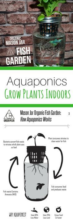 This Aquaponic mason jar would be the perfect size for apartment living. The small size would be great for beginners who want to start an indoor garden. #aquaponics #masonjar #indoorgarden #ad #apartmentgardeningforbeginners