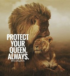 Positive Quotes : Protect your queen always. – Hall Of Quotes Lion And Lioness, Lion Of Judah, Wisdom Quotes, True Quotes, Lion Quotes, Lion Love, Warrior Quotes, Jolie Photo, Badass Quotes