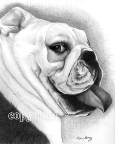 Olde English Bull Dog Pencil Drawing Portrait, Pets, Bully, Pencil Portrait