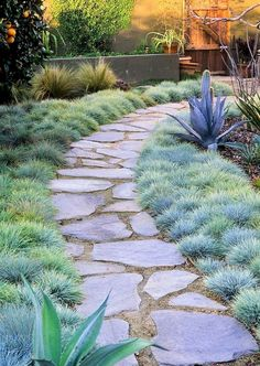 Flagstone path in small backyard garden with orange tree, cactus and bunch grass. Flagstone path in small backyard garden with orange tree, cactus and bunch grass… Flagstone path in small backyard garden with orange tree, cactus and bunch grass lawn Backyard Plants, Small Backyard Gardens, Stone Backyard, Backyard Trees, Backyard Pavers, Large Backyard, Stepping Stone Pathway, Stone Pathways, Flagstone Pathway