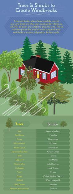 23 Best Wind Blocking Trees Images Landscaping Trees Shrubs Vegetable Garden
