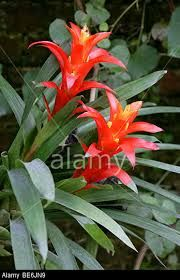 Image result for Bromeliaceae