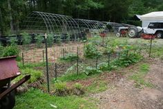 Cattle Panel Arch Trellis TUNNEL!  pumpkins, gourds, cucumbers, cantaloupes, and some squash growing on them.  Oooh I could maybe do this as the chicken run instead of a big rectangle. gotta think about this....