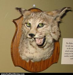 Bad Taxidermy - Home                                                       …