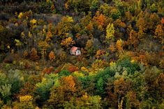 cozy-cabins-in-the-woods