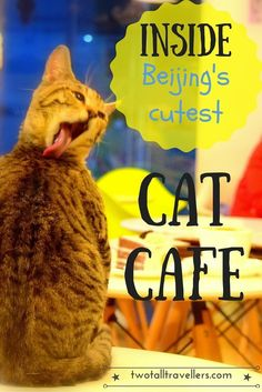 Peek inside what must be Beijing's cutest cat cafe! Join the fun and enjoy cuddles with these beauts!
