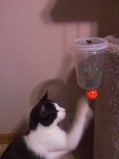Cat Powered Auto Feeder. I am so doing this for my crazy kitten who loves food, loves to play -- and does not get enough of either in his opinion.