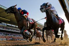race horse legs running - Google Search