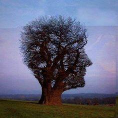 «Un jour, je ne sais pas pourquoi,  Mais sait-on jamais pourquoi,  Je suis devenu un arbre.»    Georges Ribemont-Dessaignes