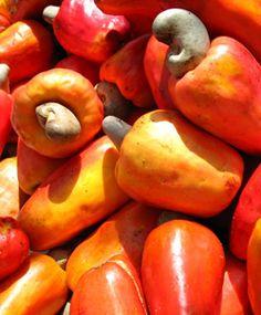 Ini dia berbagai manfaat jambu monyet http://www.perutgendut.com/read/daftar-manfaat-luar-biasa-si-jambu-monyet/1358 #Health #Food #Kuliner #Indonesia