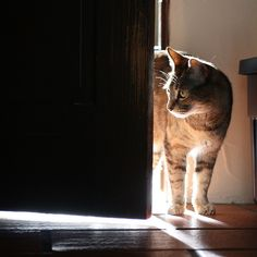 | The light beyond | by jrorci, via Flickr