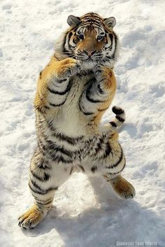 """"""" This wuz called 'fist a cuffs' in de old days. Now it's me challengin' yoo to a fight."""""""