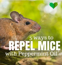 Repel Mice Peppermint Oil