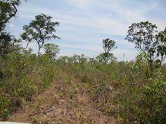 http://www.brasil.gov.br/meio-ambiente/2013/10/projeto-cerrado-jalapao-seleciona-assessor-tecnico/cerrado-jalapao.jpg/@@images/37b51c77-c735-4c5b-9df0-f13c4161de66.jpeg