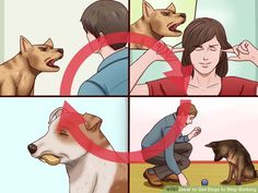 How to Get Dogs to Stop Barking