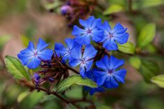 Photograph plumbago by Richard Kam on 500px