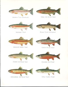 1000 images about fly patterns on pinterest trout fly for Types of fly fishing flies