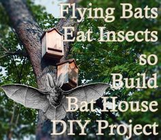 Flying Bats Eat Insects so Build Bat House DIY Project Homesteading - The Homestead Survival .Com