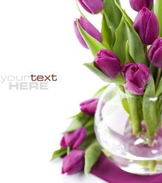 fresh flowers background of highdefinition picture five