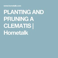 PLANTING AND PRUNING A CLEMATIS | Hometalk