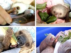 It's been a while! #SlothFriday