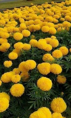 Most Beautiful Flower Pictures, Beautiful Flower Quotes, Beautiful Flowers Garden, Amazing Flowers, Beautiful Roses, Pretty Flowers, Yellow Flowers, Beautiful Gardens, Exotic Flowers