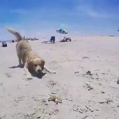 He might be a little crabby after this encounter with the pupper!   via: http://i.imgur.com/iJfSl3R.mp4 https://video.buffer.com/v/577b04a1a0cad32303c90608