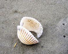 Magical sea shell & starfish photography (26 photos) - Xaxor