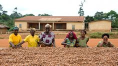 Kuapa kokoo: How cocoa farmers' cooperative behind Divine chocolate was formed