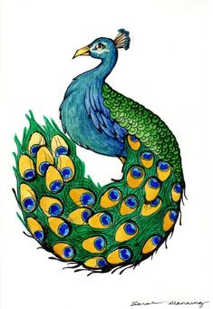 how to draw a peacock | Peacock Drawing Pictures