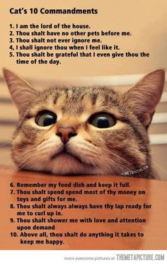 #Cat's ten #commandments…