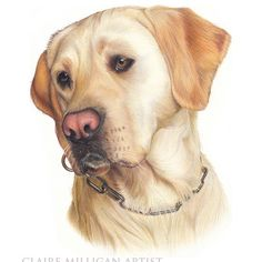 This portrait is from a few years ago - It was one of the first portraits that I did as a sample piece. #goldenlab #goldenlabrador #labrador  #petportrait #petportraitartist #dogportrait #dogdrawing #theartsfans