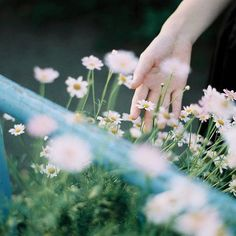 Beautiful Hands, Beautiful Flowers, Beautiful Pictures, Grange Restaurant, Hand Photography, Natsume Yuujinchou, A Silent Voice, Spring Is Coming, Wild Flowers