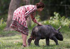 Duques de Cambridge disfrutan de safari en noreste de India. El príncipe Guillermo de Inglaterra y su esposa Catalina, antes conocida como Kate Middleton, pasaron varias horas en el Parque Nacional Kaziranga, una visita con la que buscaron llamar la atención sobre la situación de los animales en peligro de extinción, entre ellos los 2 mil 200 ejemplares de una rara especie de rinoceronte de un solo cuerno que viven en las instalaciones. -