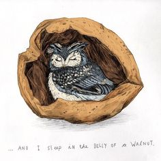 """""""... and I sleep in the belly of a walnut."""" I have had this line with me for a long time although I don't know where I heard it and it moved me to draw this illustration, my 30th of #100animals100days. I think there will be bigger gaps between animals now as times are just too busy to do it daily but I'll do my best. Have a lovely night everyone :-) x . . . #owl #bird #animal #wildlife #nature #illustration #walnut #art #kunst #drawing #malerei #vogel #artist #künstler #pencil #graphite…"""