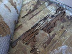 Las termitas subterráneas son, con mucho, las especies más destructivas. Pueden derrumbar un edificio por completo, es decir, es una posible ruina financiera para un dueño de casa. http://www.orkin.cl/control-de-termitas/
