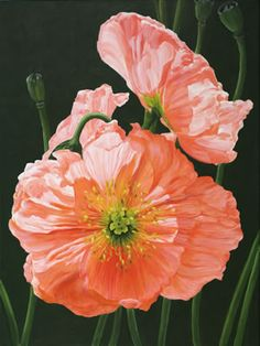 Iceland Poppies Giclee Print by Lexi Sundell--fabulous translucency in those petals!
