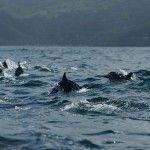 Parque Nacional Mochima #Delfines, Venezuela