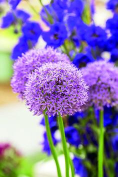 Aby vynikla krása rostlin | Flóra na zahradě Flora, Plants, Plant
