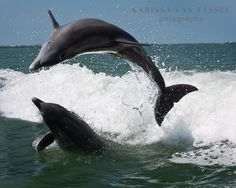 Dolphin Photograph - Dolphin Photography - Ocean Photograph - Circle of Life Print Dolphin Images, Dolphin Photos, Ocean Photography, Animal Photography, Beautiful World, Beautiful Images, Dolphin Tours, Beautiful Sea Creatures, Circle Of Life