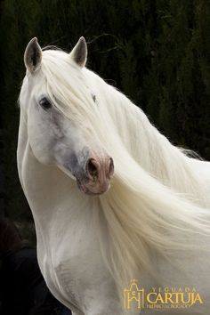 Horses / Caballos