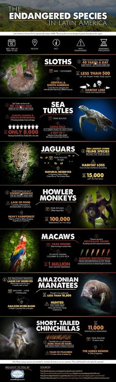 In case you ever wondered what species of animals are going extinct in Latin America...here is the following infographic. What can be done a...